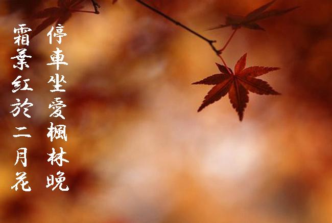 紅葉のコピー.jpg